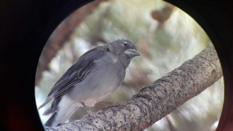 Avistamiento de aves en Tenerife y Canarias