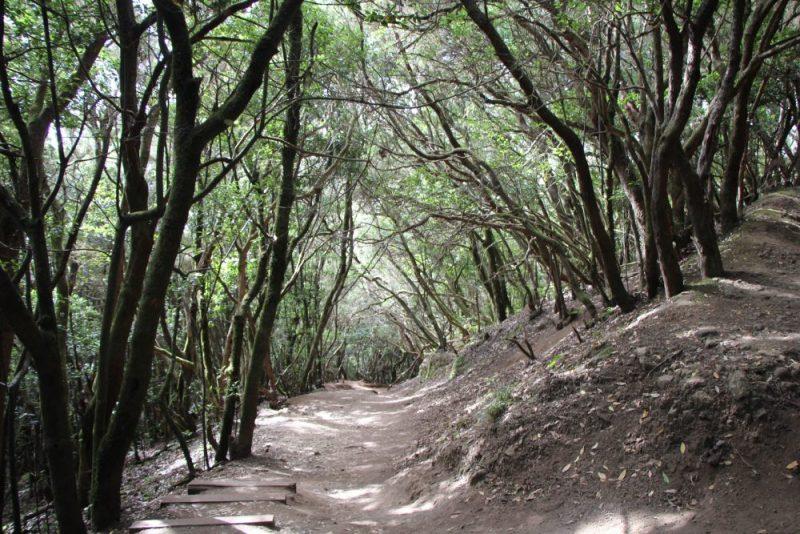Camino bajo el bosque de Anaga en Tenerife